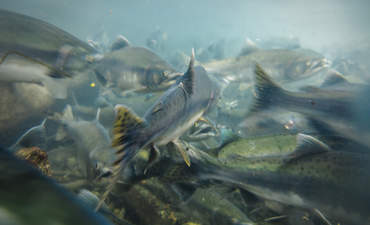 5 global trends spawning seafood innovation featured image