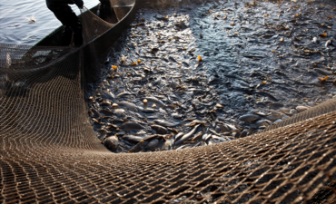 Fishing nets from industrial fishing boat