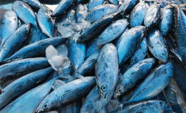 Fish at market in Thailand