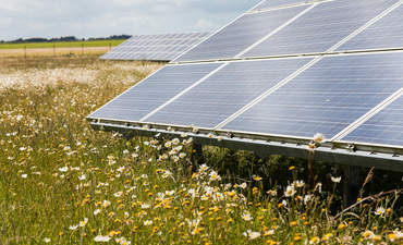 The business case for pollinator-friendly solar sites featured image