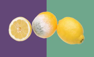 spoiled lemons