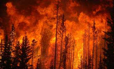 Can Carbon Markets Help Reduce Forest Fires? featured image