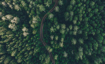 Forest road view from the sky