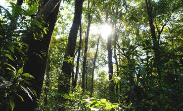 Forest restoration projects could create billions in new revenue  featured image