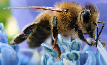 Here's hope for the bees: A manifesto featured image