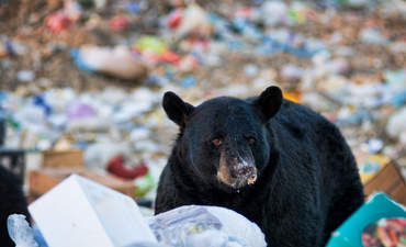 How food waste confuses wildlife featured image