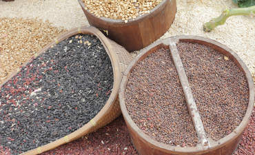 Why open-source seed breeding is critical for food security featured image