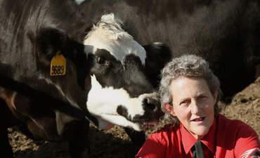 Temple Grandin, animal welfare expert, Colorado State University