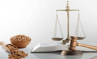 Gavel, scale and grains of barley