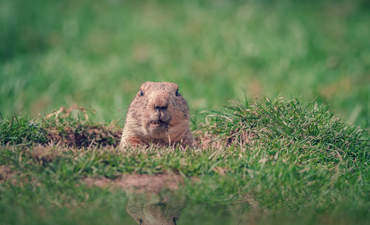 Are we experiencing a Groundhog Day of ESG information? featured image