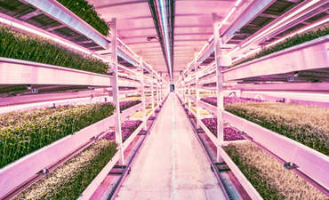 Something delicious is growing in the 'sustainability underground' featured image