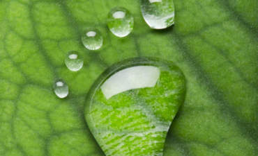 Carbon neutrality and water: Do they mix? featured image