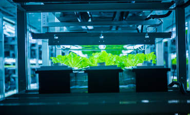 See Microsoft's in-office urban farming experiment featured image