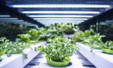 Cultivating a regenerative food system featured image