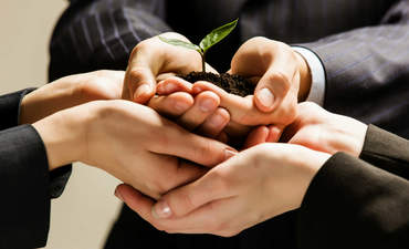 Hands holding green sprout