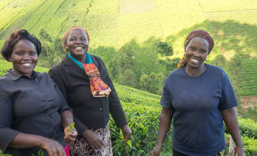 Why British coffee and tea maker Taylors prioritizes supplier resilience featured image