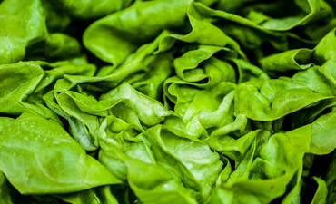 Lettuce food waste innovation