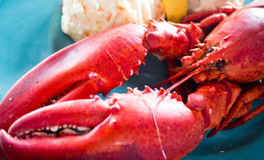 Red Lobster parent, Walton foundation dive into fisheries funding featured image