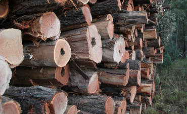Logs from clearing for open-cut coal in Leard State Forest