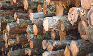 Why CGF and TSC are collaborating to end deforestation featured image