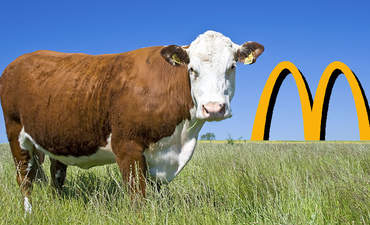 Principles in place, McDonald's looks to Canada for sustainable beef featured image