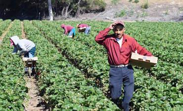 Migrant Labor