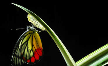 Inside Caterpillar's culture of transformation featured image