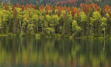 How pine beetles can predict the future of climate change featured image