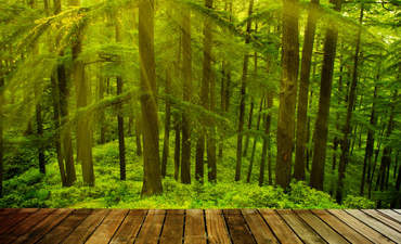 GreenBiz 101: Deciphering the concept of natural capital featured image