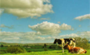 Agriculture and Biodiversity: Challenges and Opportunities for Agribusiness featured image