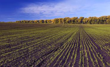 rows of crops in wheat fields