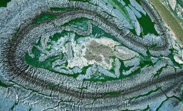 Blue algae on a lake