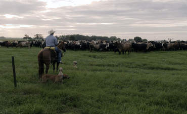 What does sustainability mean for beef? featured image