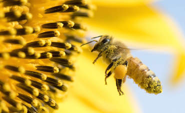 What exactly does a Chief Pollinator do? featured image