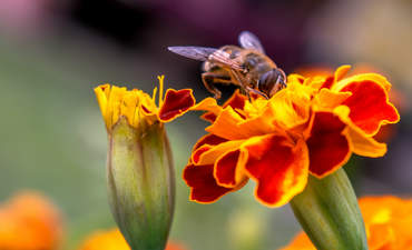 What's the best way to improve bee habitats? featured image