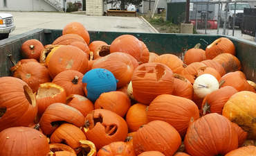 "Nearly 20 cubic yards of pumpkins, collected at the City of Wheaton's first annual ""Pumpkin Pitch"""
