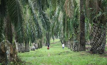 BASF drives change in the palm-oil supply chain featured image