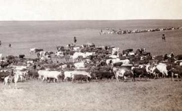 A cattle roundup from another era in agriculture, Belle Fourche, Dakota Territory, 1887.