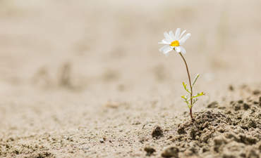 Resilience, in this moment featured image