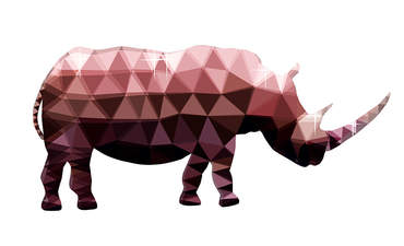 What conserving rhinos taught me about climate economics featured image