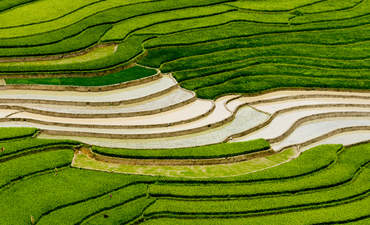 Rice 2.0? The search for a more sustainable staple food featured image
