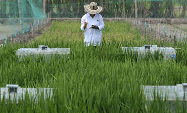 Measuring greenhouse gas emissions in a rice paddy in Columbia, Neil Palmer, CIAT.