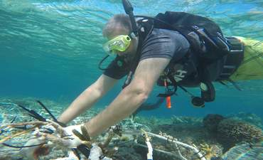 What I learned restoring the world's largest coral reef with Mars featured image