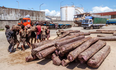 Workers loading rosewood on trucks at the port of Toamasina, east of Madagascar.