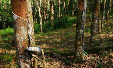 GM, Michelin put brakes on deforestation linked to rubber  featured image