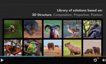 5 great GreenBiz videos about biomimicry featured image