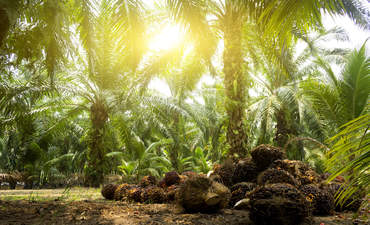 With clock ticking on 2020 deforestation pledges, 5 ideas for sourcing palm oil sustainably featured image