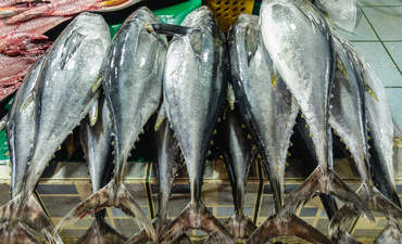 Fresh Philippine Yellow Fin Tuna in Fish Market