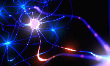 interconnection, neurons