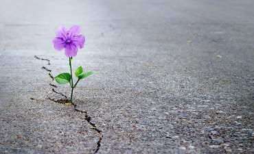hope, flower